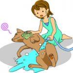 犬の暑さ対策!屋外と室内で注意すること。犬は人間より暑さに弱い