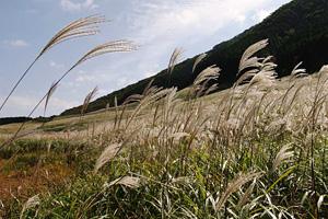 秋の七草3
